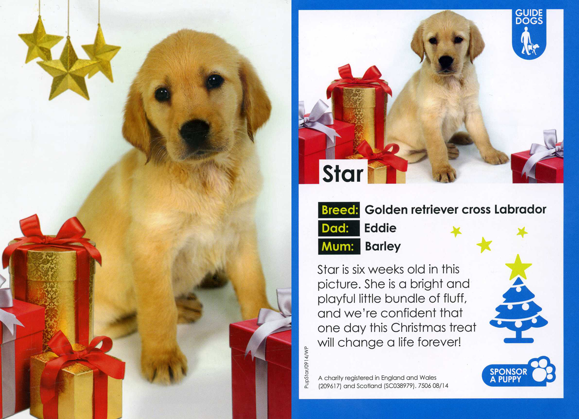 CHRISTMAS WELCOME FOR STAR