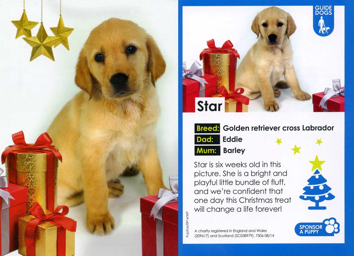 CHRISTMAS WELCOME FOR STAR